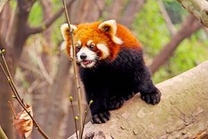 Firefox 66 coupera le son des vidéos qui se lancent automatiquement